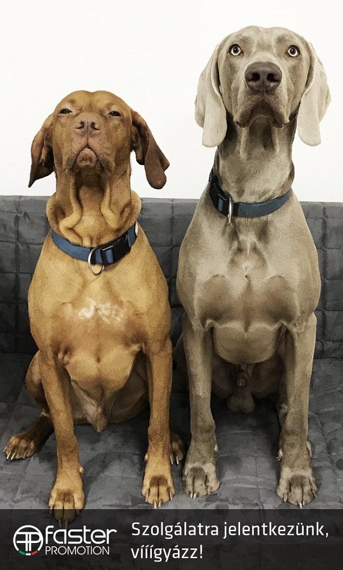 kutyabarat kutyabarát