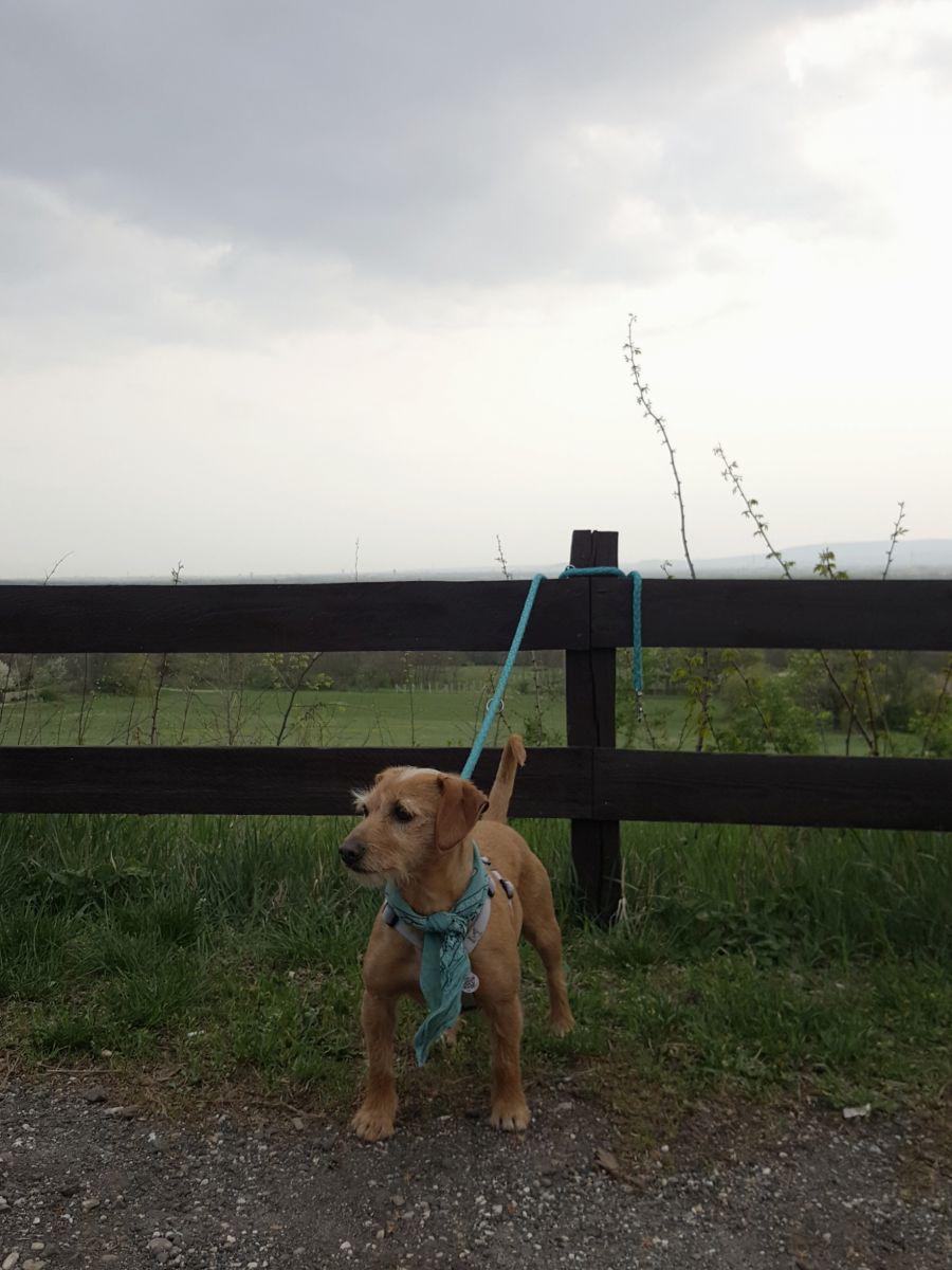 kutyabarat kutyabarát kutya kirándulás
