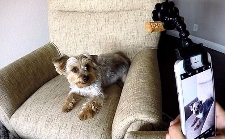 kutyabarát kutya