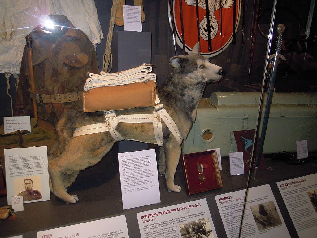 kutyabarat kutyabarat