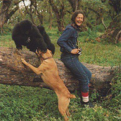 kutyabarat kutyabarát gorilla