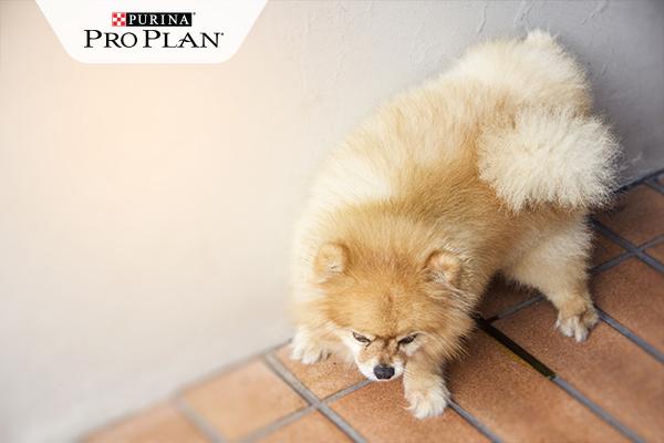 szobatisztasag kutyabarat