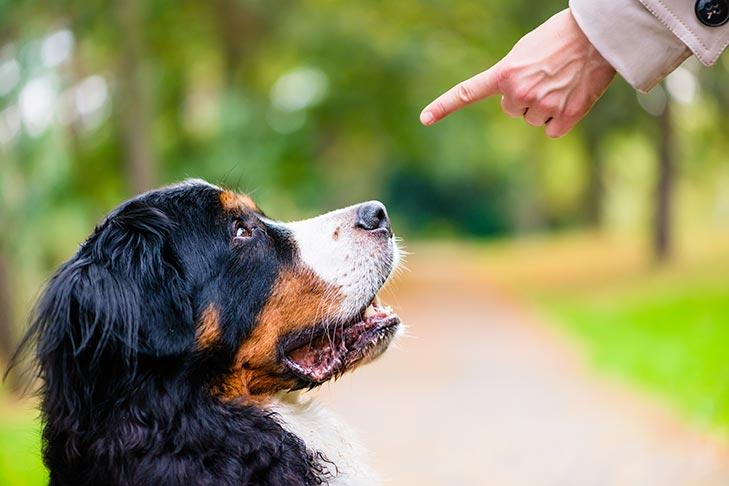 kutyabarát kutyabarat
