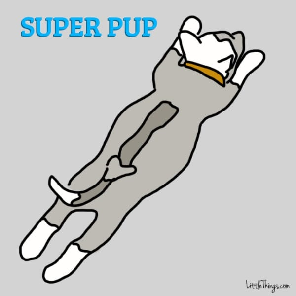 kutya alvási pozíciók