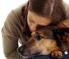 Kérdésessé válik a bírósági terápiás kutyák szerepe