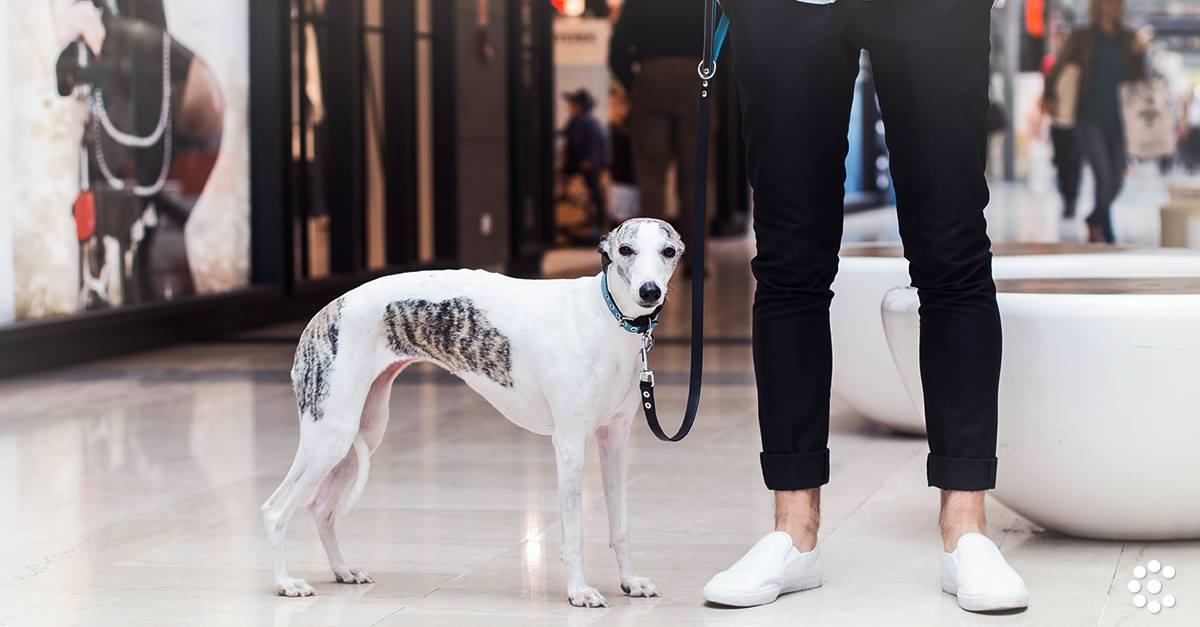 b3f1b7bee7 Bár ez a bevásárlóközpont nyitás óta kutyabarátként működött, de most  örömmel tesszük közzé a hírt, hogy immár még több üzletében is megejthetjük  a közös ...