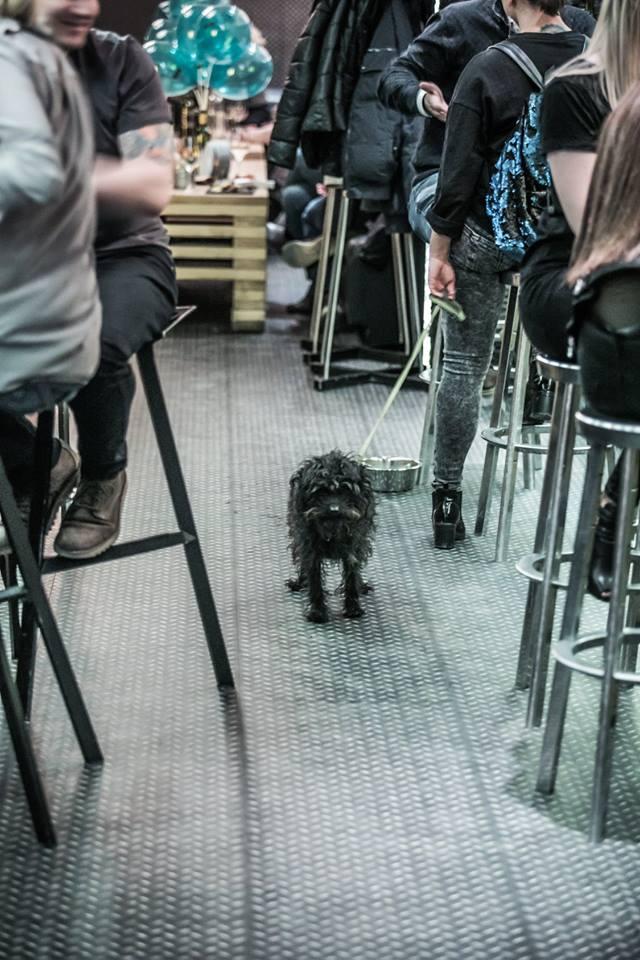 kutyabarát borbár DiVino