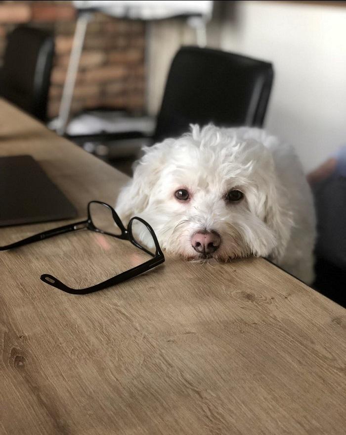 kutyabarat kutyabarát munkahely