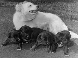 A Kennedy család kutyái