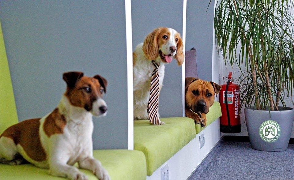 Év kutyabarát munkahelye