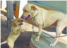 Domesztikáció - a kutya és az ember különleges kapcsolata
