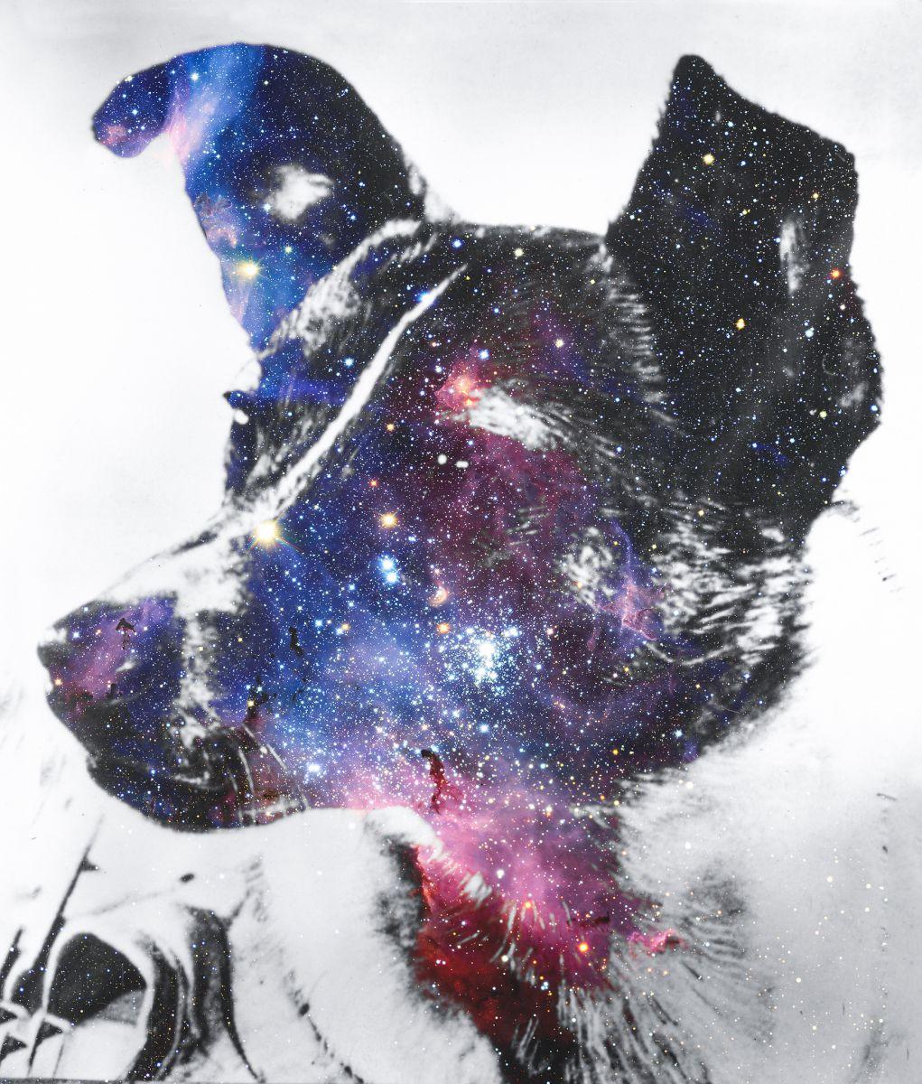 kutyabarat kutyabarát kutya