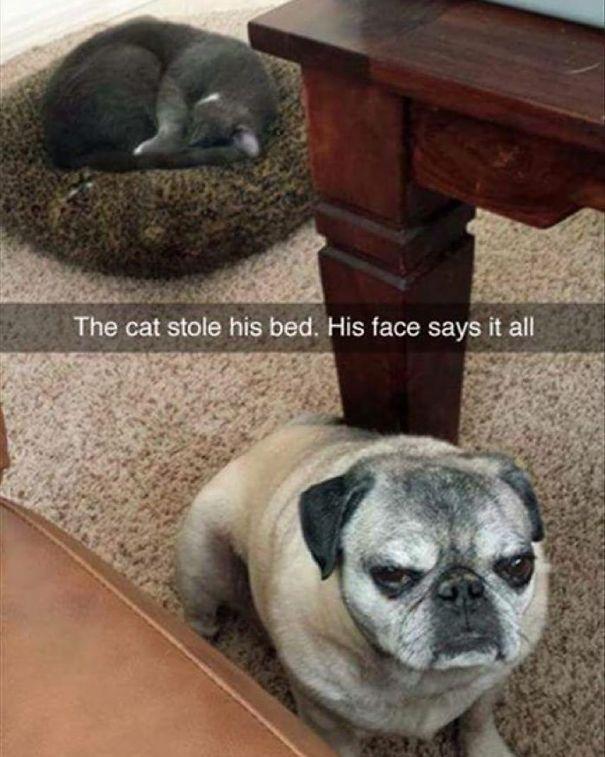 Kutyák és macskák frenetikus pillanatai