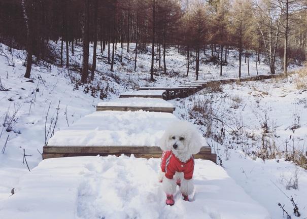 kutyamancs védelem kutyabarát