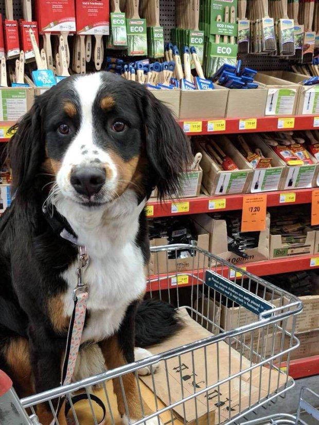 Egyre több a kutyabarát bolt, üzlet
