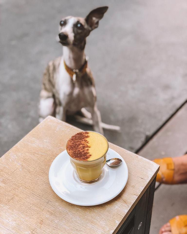 kutyabarát kávézó