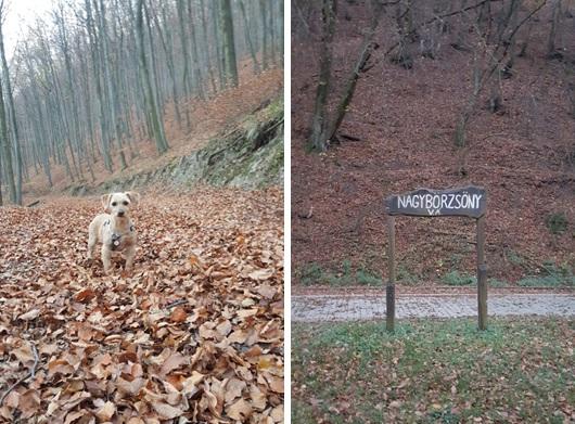 kirándulj kutyával