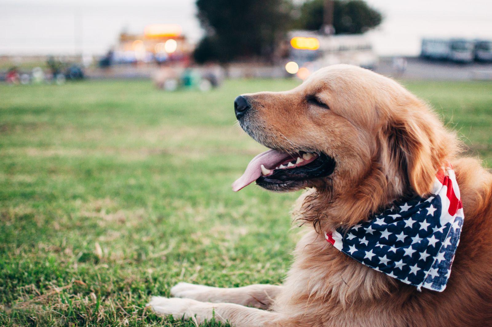 kutyabarat kutya