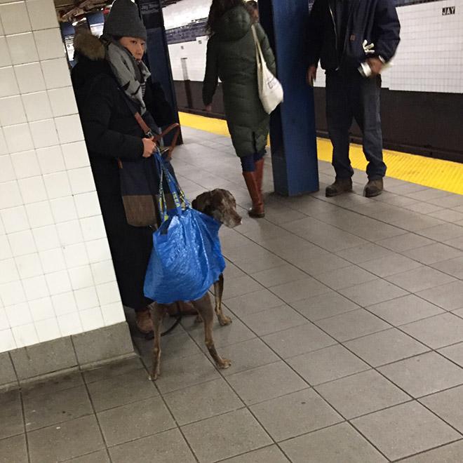 kutya kutyabarat kutyabarát