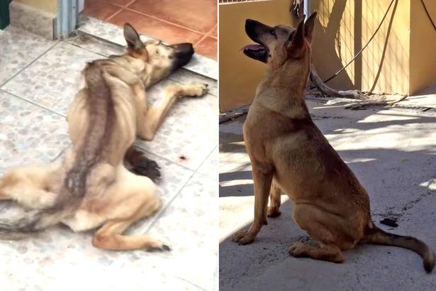 Menhelyi kutyák előtte - utána