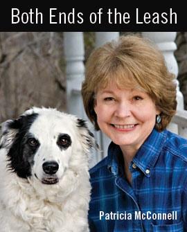 Hogyan segítsünk a pánikba esett kutyának