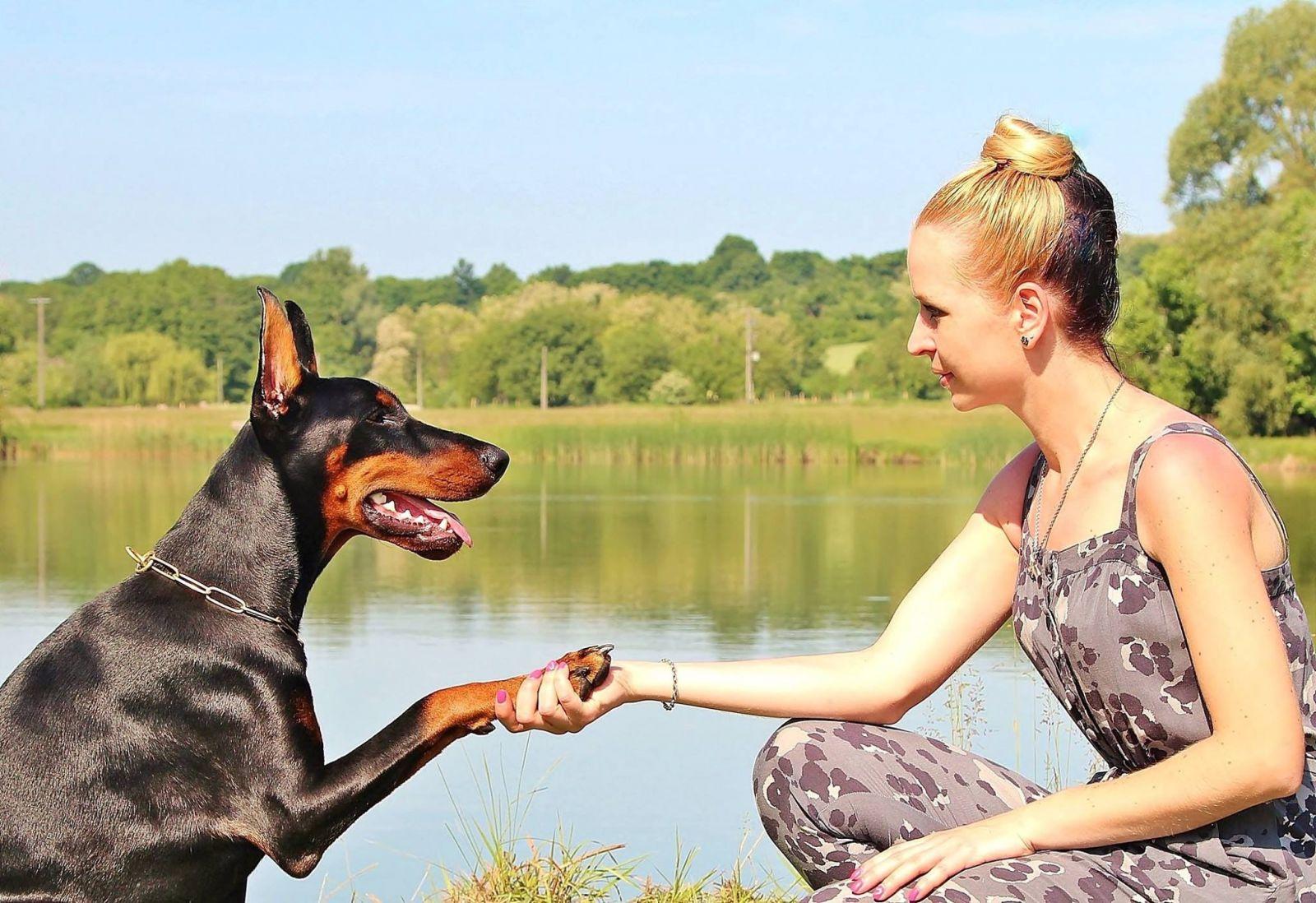 kutyabarat kutyabarát kutya nevelés