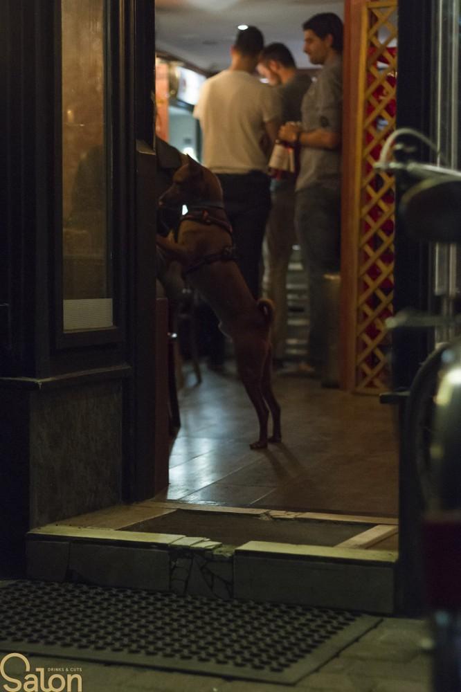 kutyabarat kutyabarát pub kocsma bár
