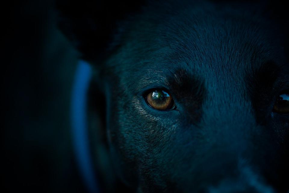 kutyák érzékszervei