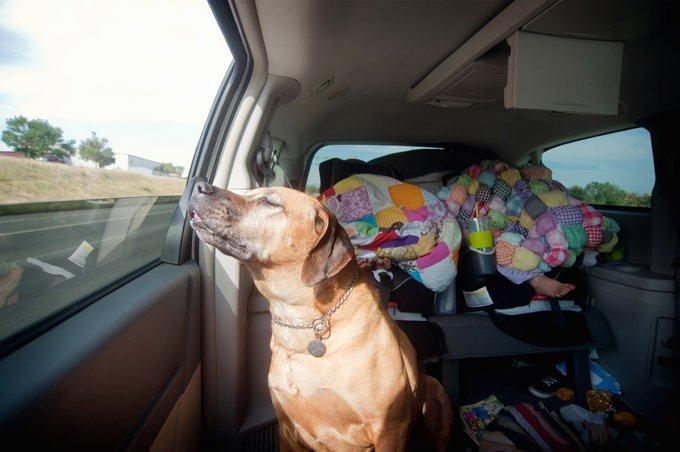 Kutyával utazás