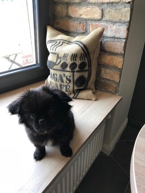 kutyabarát vargas cafe