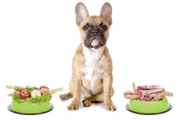 vegán kutya kutyabarát