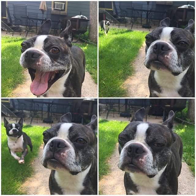 Kutyaarcok - a legjobb kedvderítők!