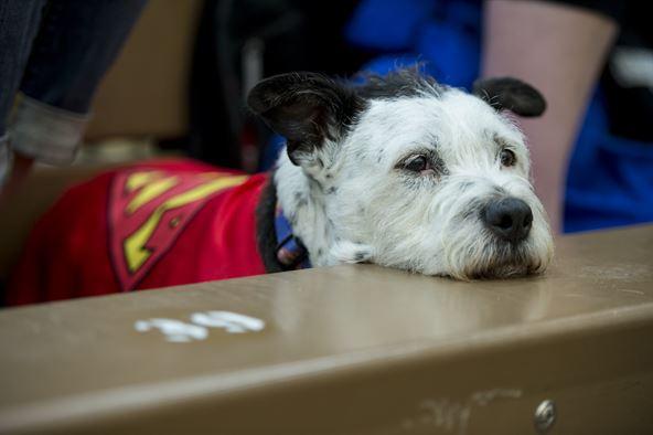 Gyermekzaklatás - Kutyák nyújtanak támogatást a bíróságon