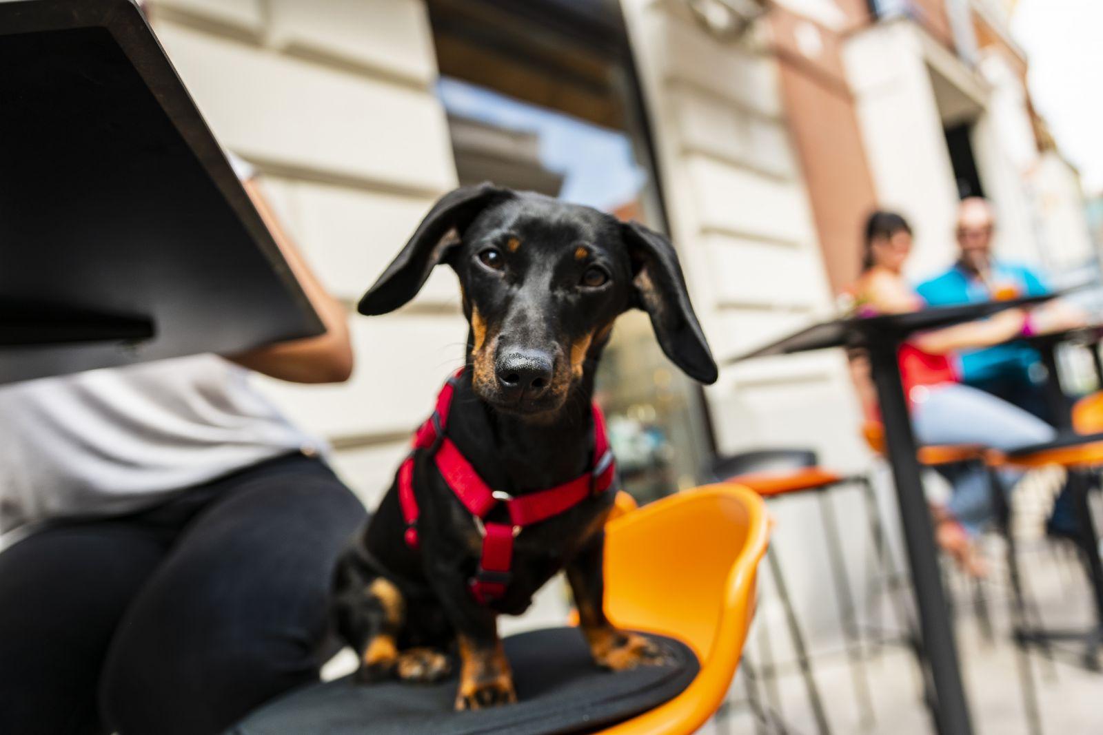 kutyabarat kutyabarát borbár