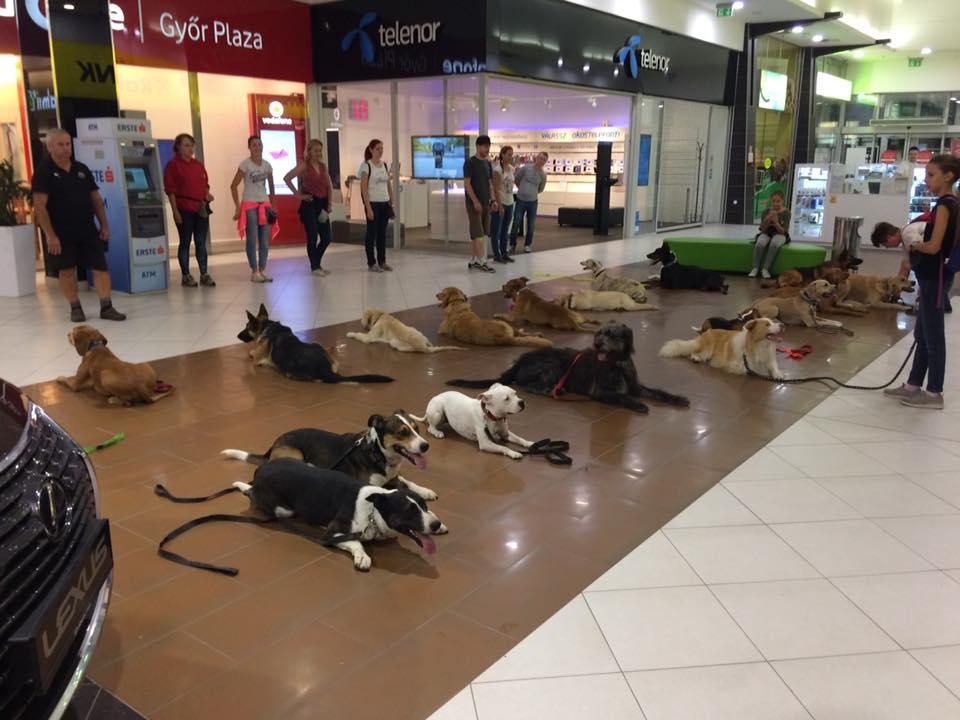 kutyabarat kutyabarát plaza bevásárlóközpont