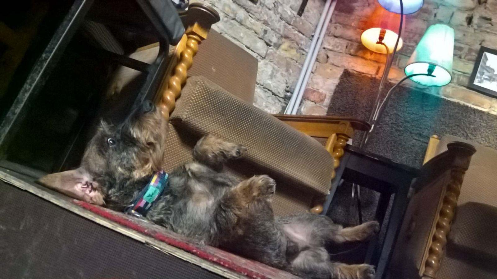kutyabarat kutyabarát romkocsma pub