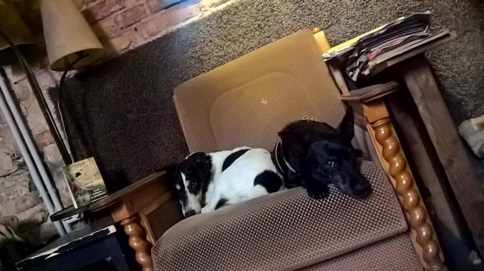 kutyabarat kutyabarát romkocsma pub kutya