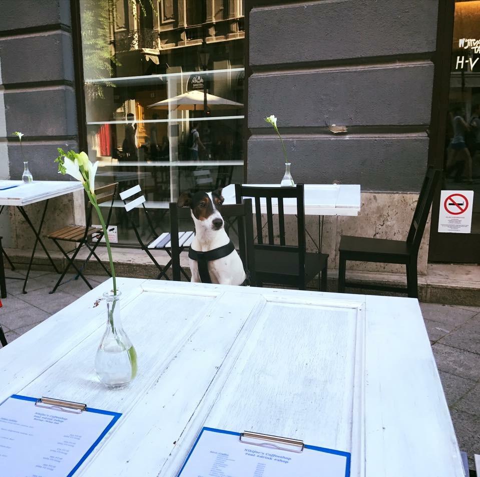 kutyabarat kutyabarát kávézó