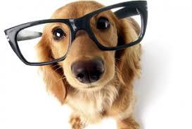 kutyabarat kutyabarát üzlet optika