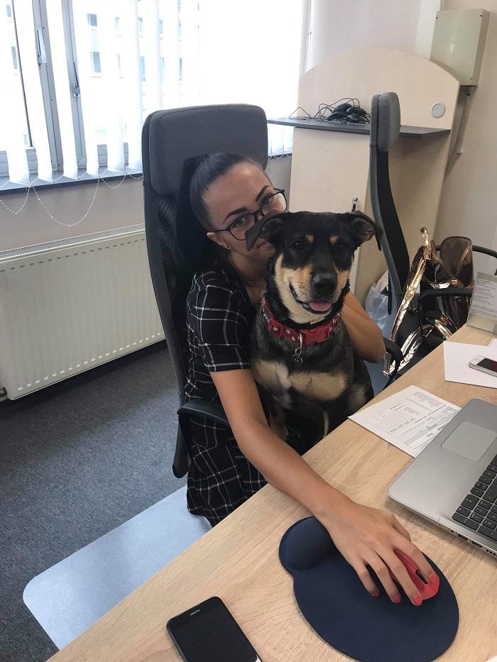 kutyabarát iroda