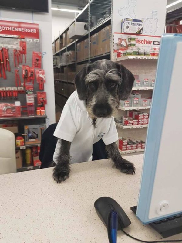 kutyabarát bolt