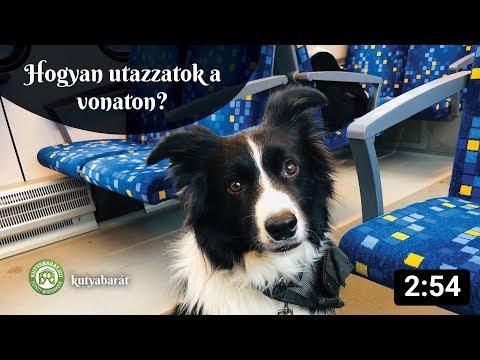 Így vonatozz a kutyáddal szakszerűen!