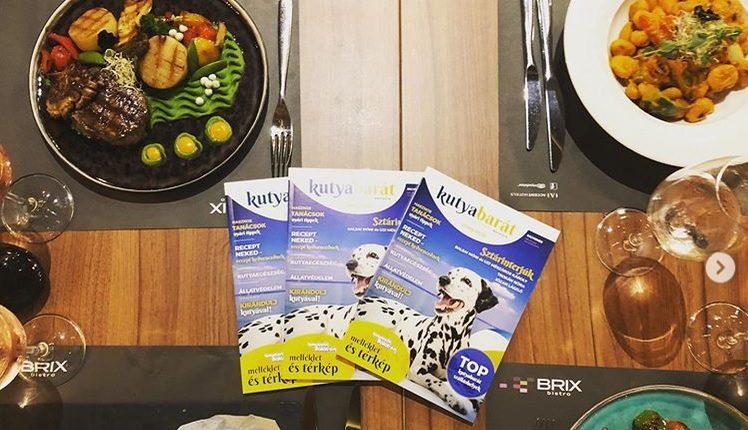 kutyabarát magazin
