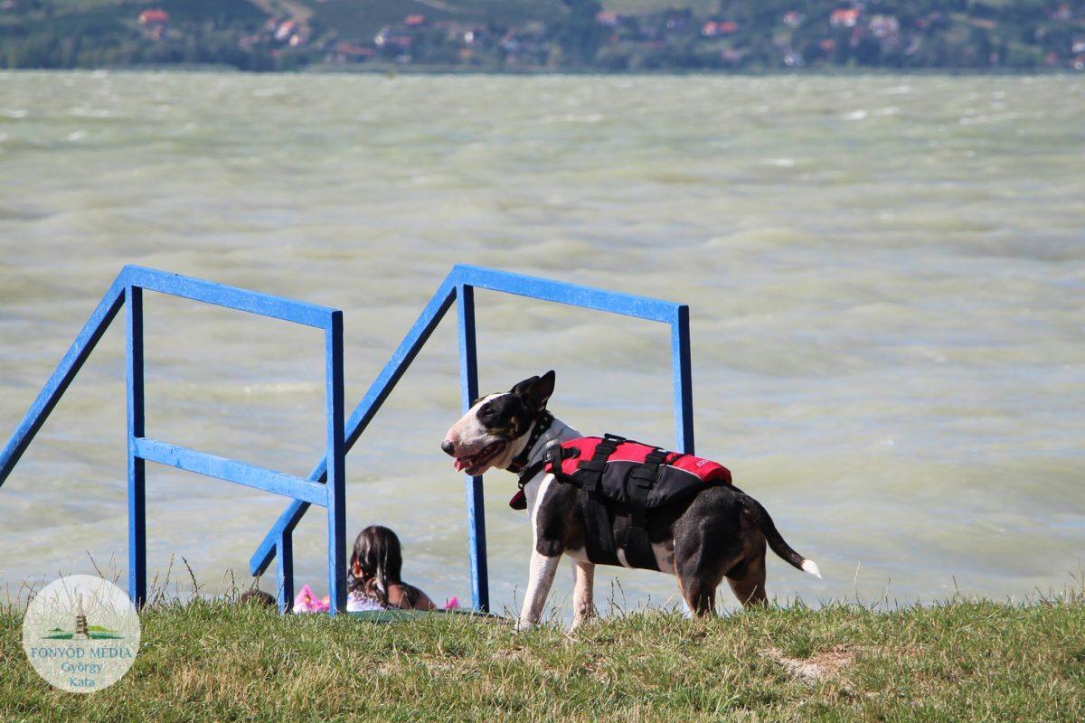 kutyabarát strand