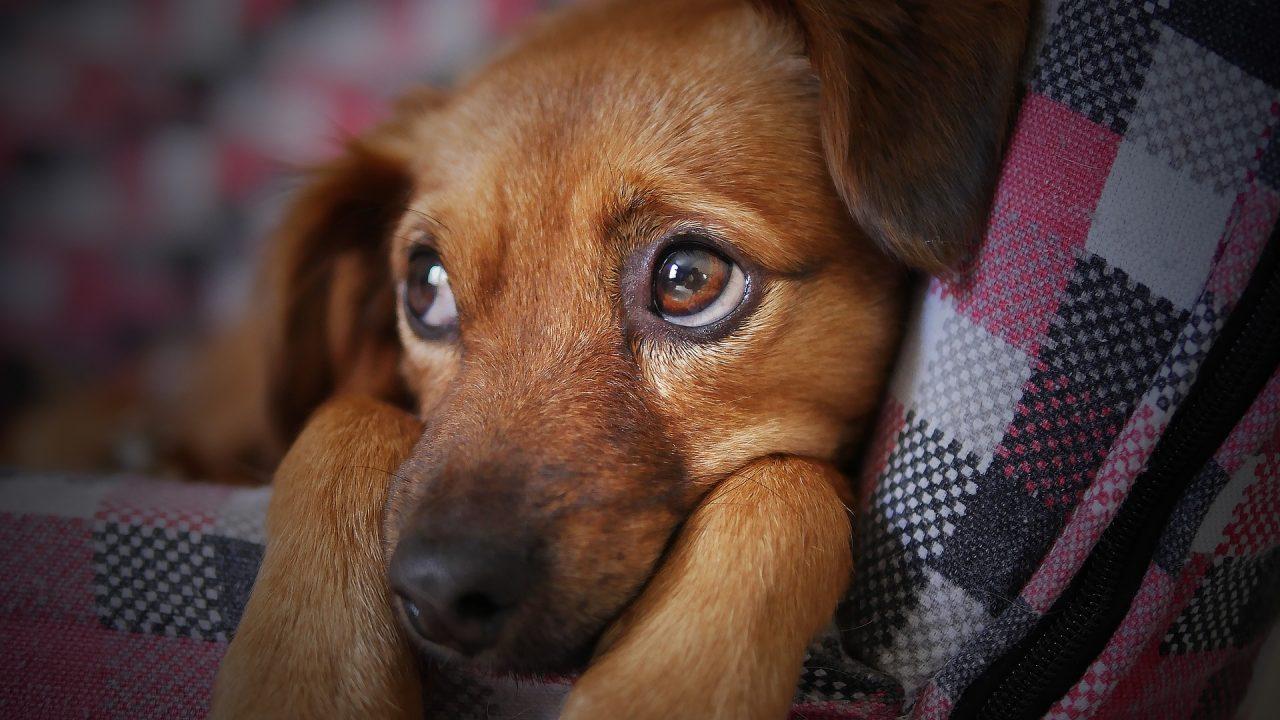 stressz kutyáknál