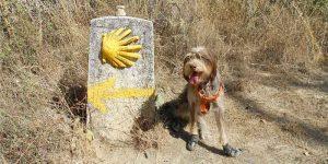 Legendás túraútvonalak - El Camino kutyával