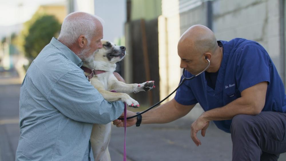 utcai állatorvos