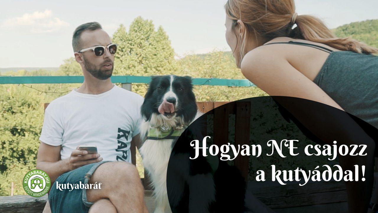 kutyabarát fesztivál Bártfalvi Sándor