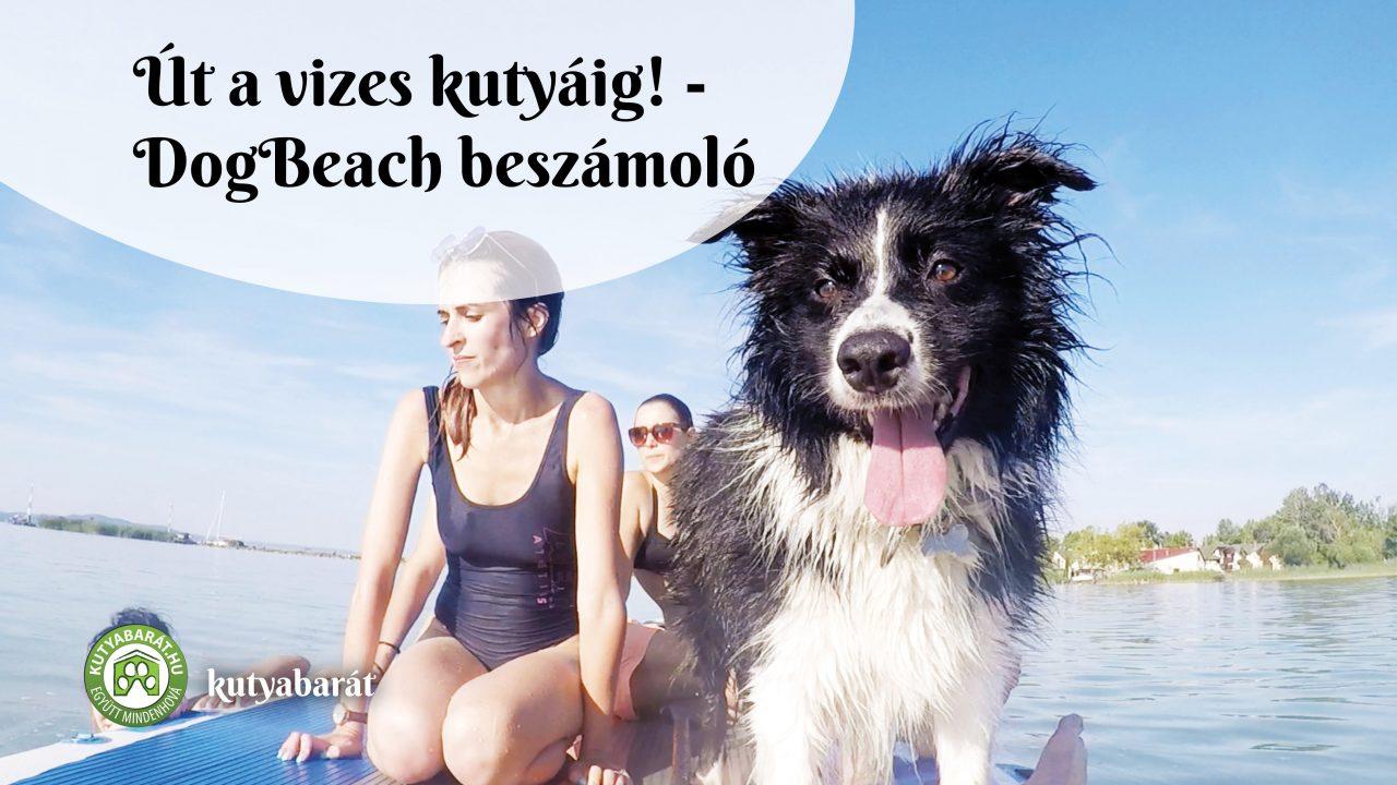 kutyabarát strand Balaton
