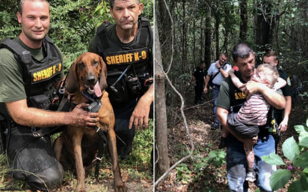 Angol véreb találta meg az erdőben elveszett 3 éves autista kisfiút.